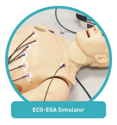 ECG-EGA Simulator